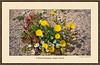 A Desert Bouquet, Negev, Israel the Beautiful #4