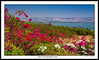 Mount of the Beatitudes,  Israel the Beautiful #2