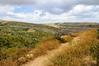 Israeli landscape