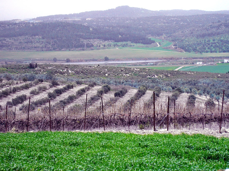 Agricultural Kibbutz