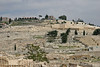 Mount of Olives from City of David