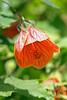 Orange Flower @ Bethesda Pool