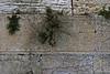 Western Wall Prayer Offerings