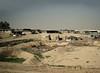 Bedouin Camels, Outskirts, Be'er Sheva, Israel