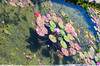 Flowers on the water