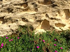 Sand and flowers