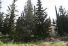 יער רמות 6