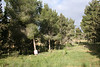 יער רמות 2