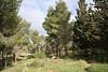 יער רמות 7