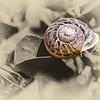 Snail on monochrome
