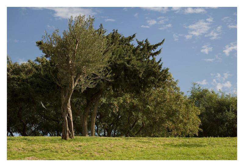 Tel Aviv's Parks