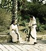 Attendants, I, Eritrean Ceremony, Jaffa, Israel