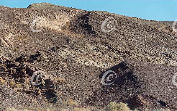 Four Dorcas Gazelles Escaping up a Barren Desert Hillside