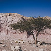 Nahe Red Canyon