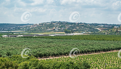 Israeli Orchards and Vinyard with Palestinian Town in the Background