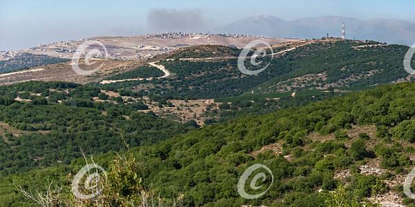 Reforestation on the Israel Lebanon Border