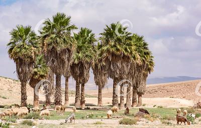 Desert Oasis Near Arad Israel