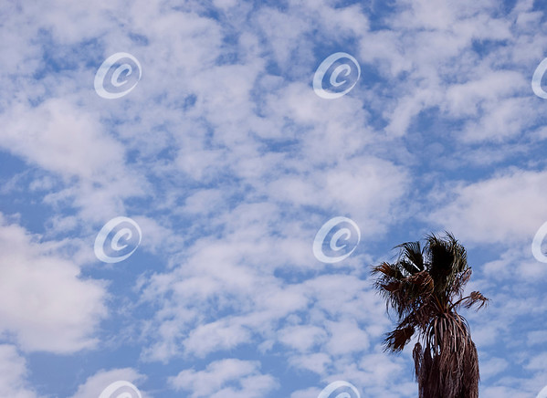 clouds are soft without edges and tree is sharp