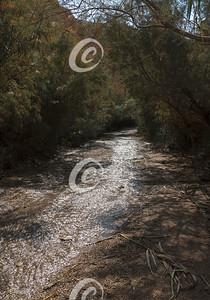 Spring Fed Desert Stream Microclimate near the Dead Sea