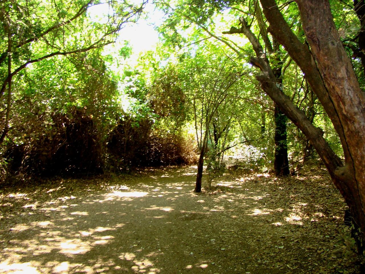 Tel Dan Nature Reserve path-Not typical N  Israel