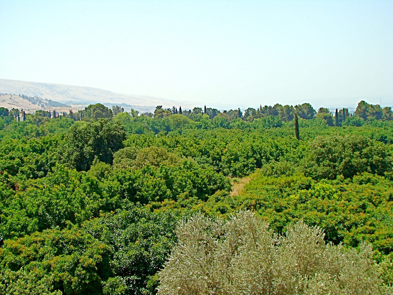 Tel Dan-Golan Heights(left) and Hula Valley(Rht)