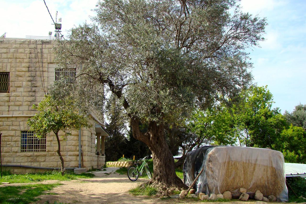 Hebron Scenery