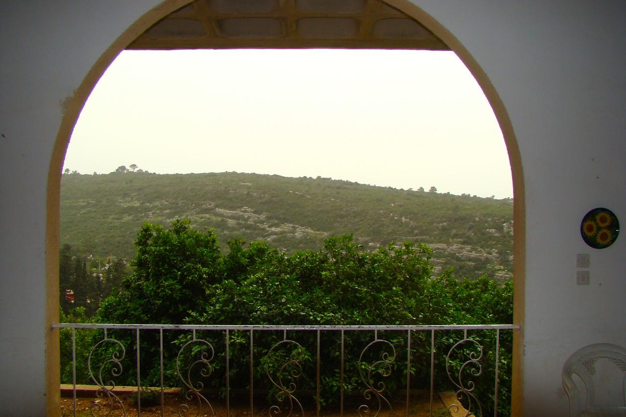 Ein Hod-Patio   Citrus Trees