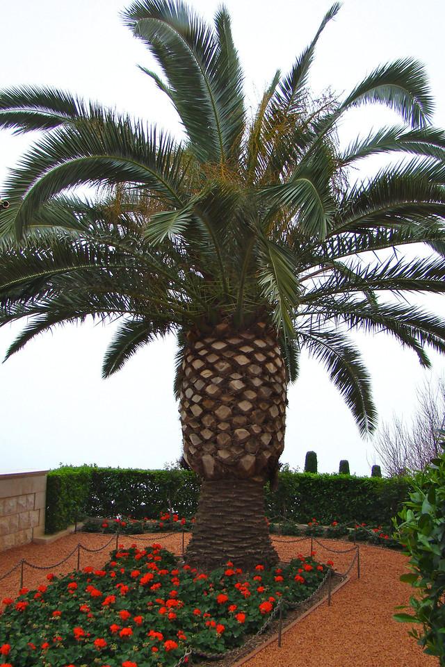 Haifa-B'hai Gardens 4