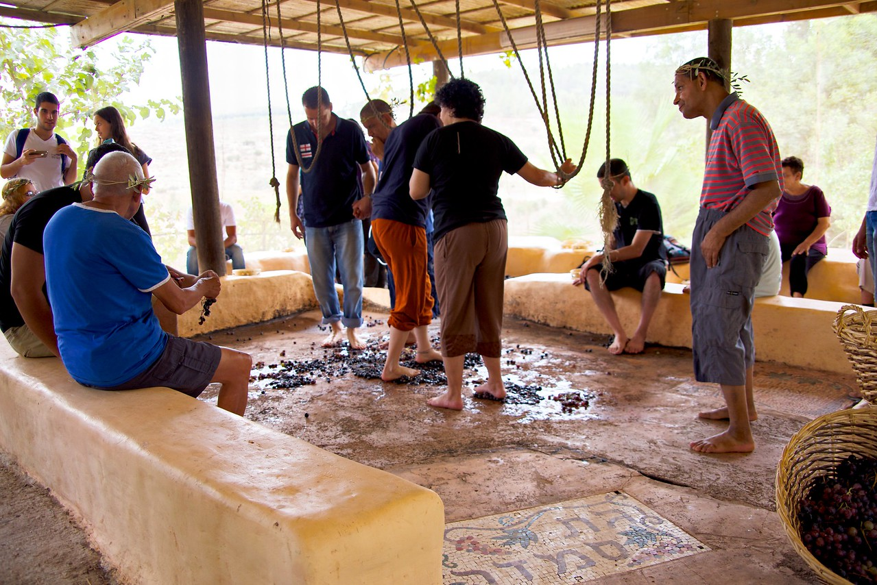 A group of low functioning adults first learn to wash their feet and press the grapes by stomping on them.