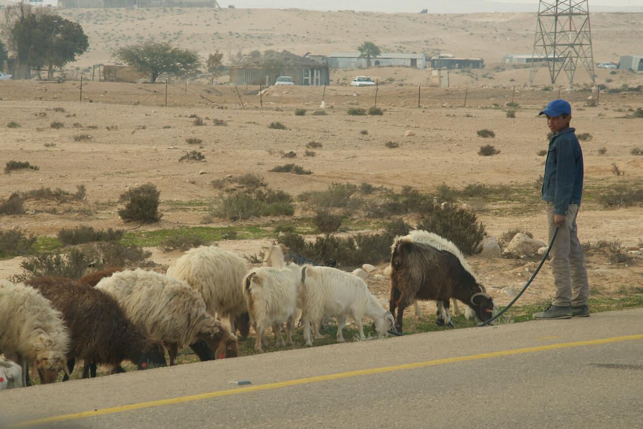 Beduin Boy (from car)