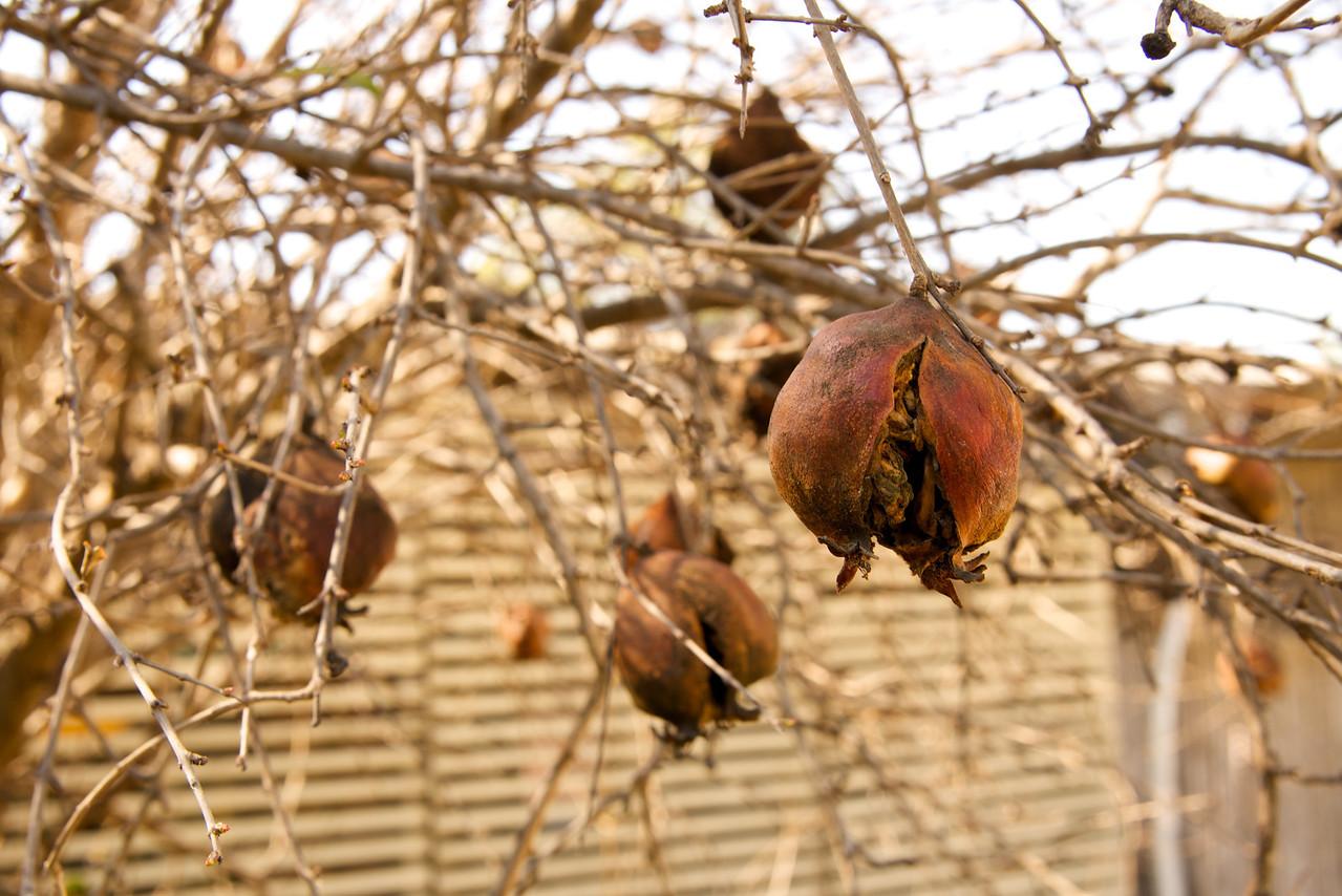 Dried Pomegranates