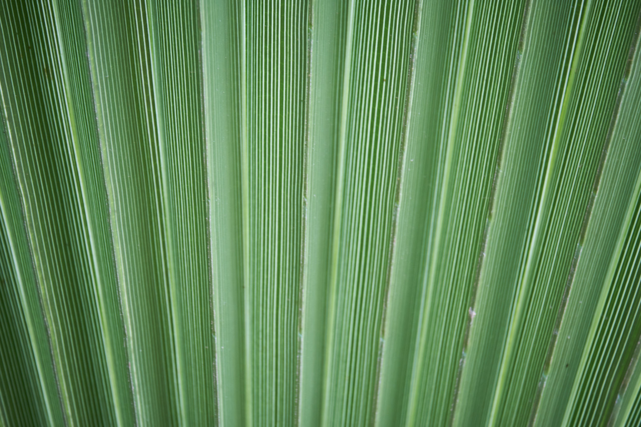 Leaf lines.