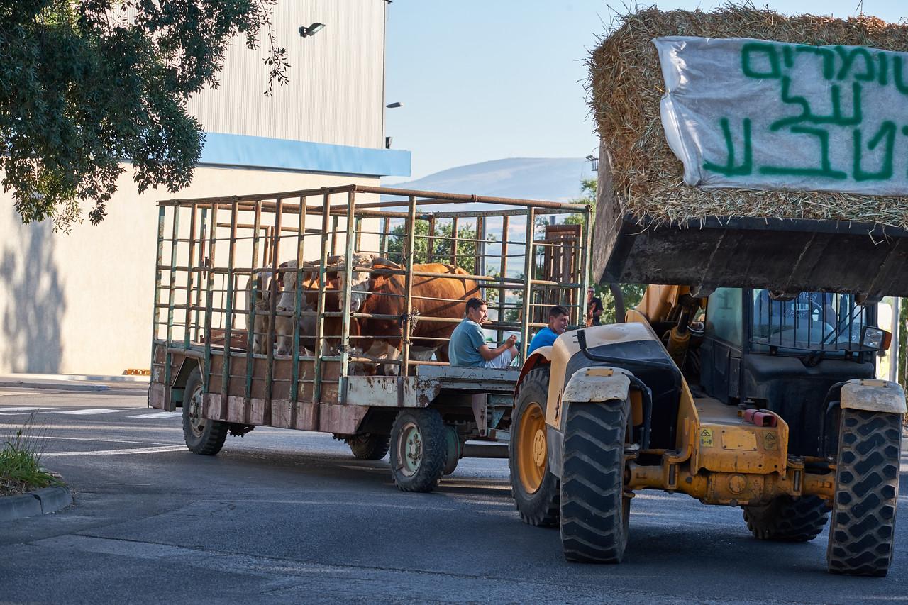 Presenting Kibbutz Shamir's livestock tractor.