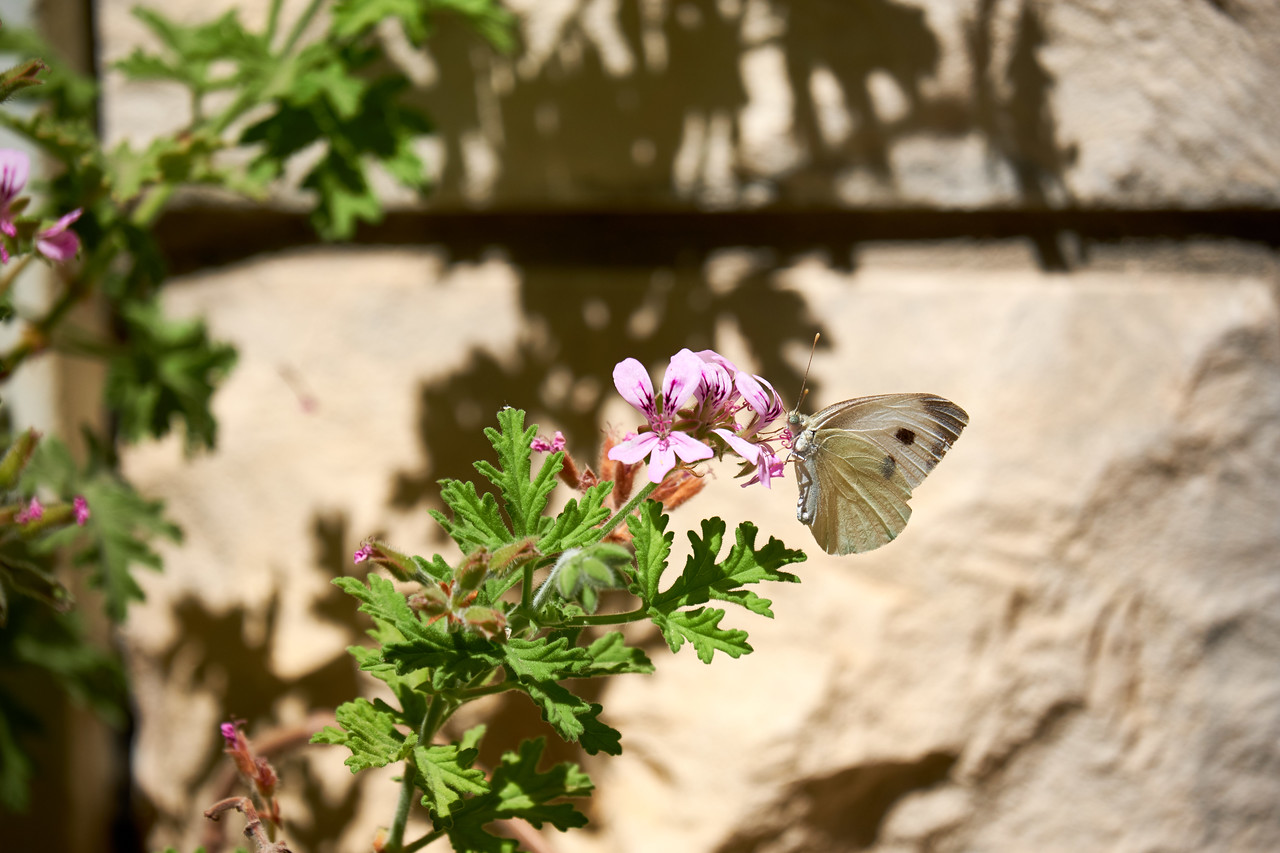 Butterfly and flower.