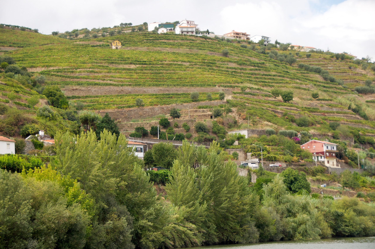 Duoro River Valley… Rows and Rows of Grape Vines