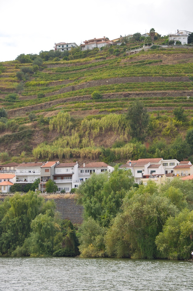 Duoro River Valley… Port Grapes and Olive Trees