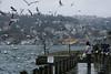 Feeding the birds, Beylerbeyi, Istanbul, Turkey