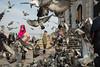 The birds, Eminönü, Istanbul, Turkey