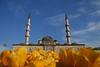 Tulip time, Yeni Cami, Eminönü, Istanbul, Turkey