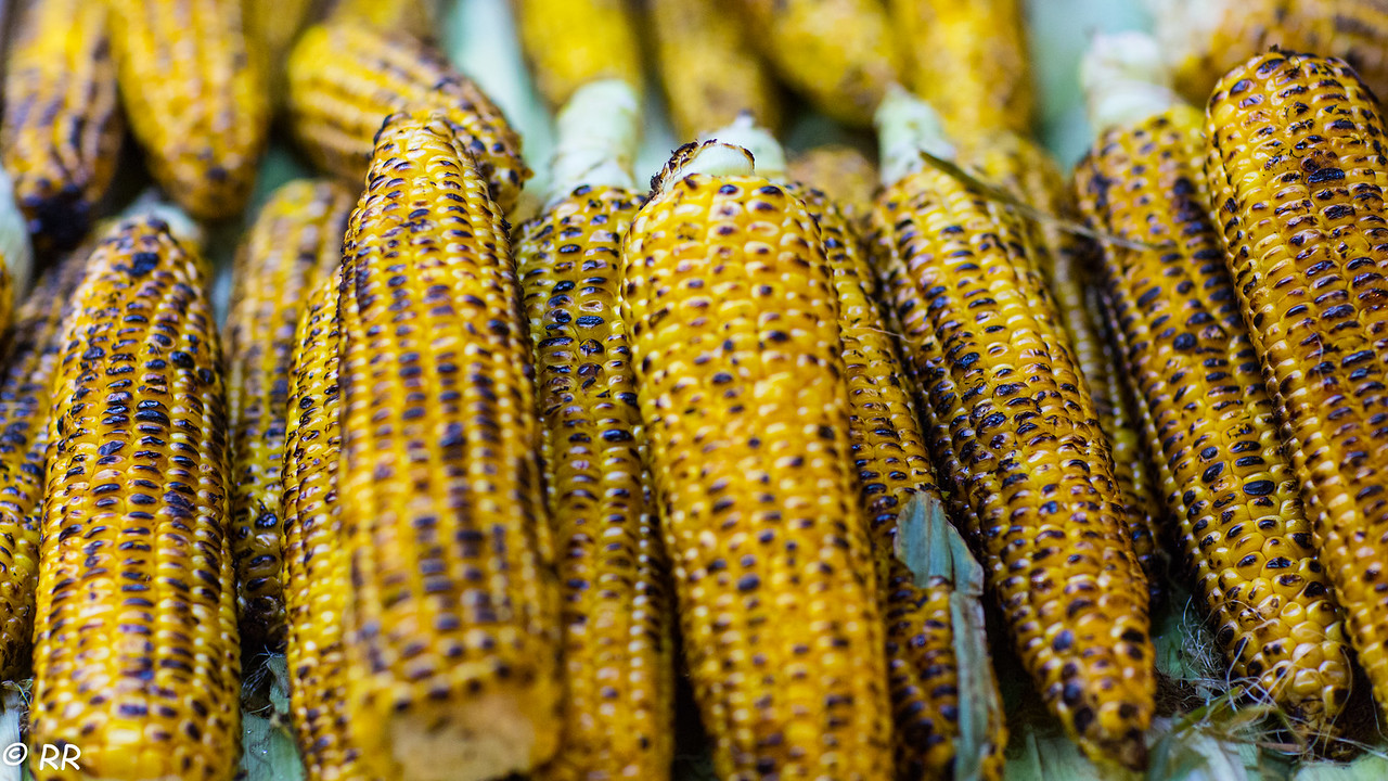 Mısır – freshly boiled or grilled corn on the cob