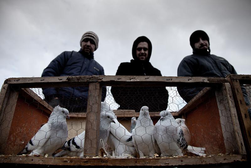 Pigeon sellers, Istanbul, Turkey