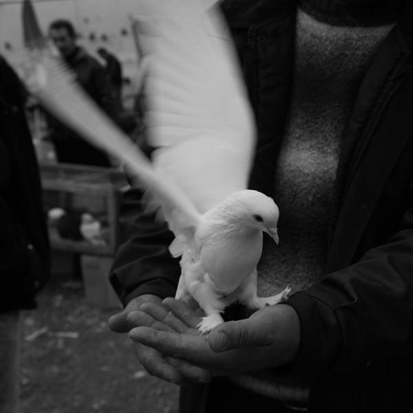 Bird in the hand II, Istanbul, Turkey