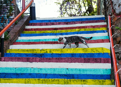 Stairway's & Cat's of Istanbul