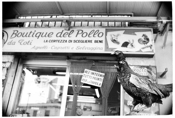 BOUTIQUE DEL POLLO