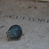 Brass pod on sculptor's gravestone, Foreigner's Cemetery, Roma, 2010.