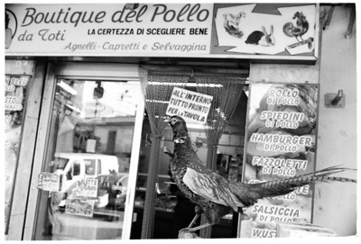 BOUTIQUE DEL POLLO2