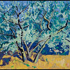 "Olive Tree Montecastello 2011, 12""x16"" oil on panel"