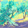 olive trees, 2011, ipad painting
