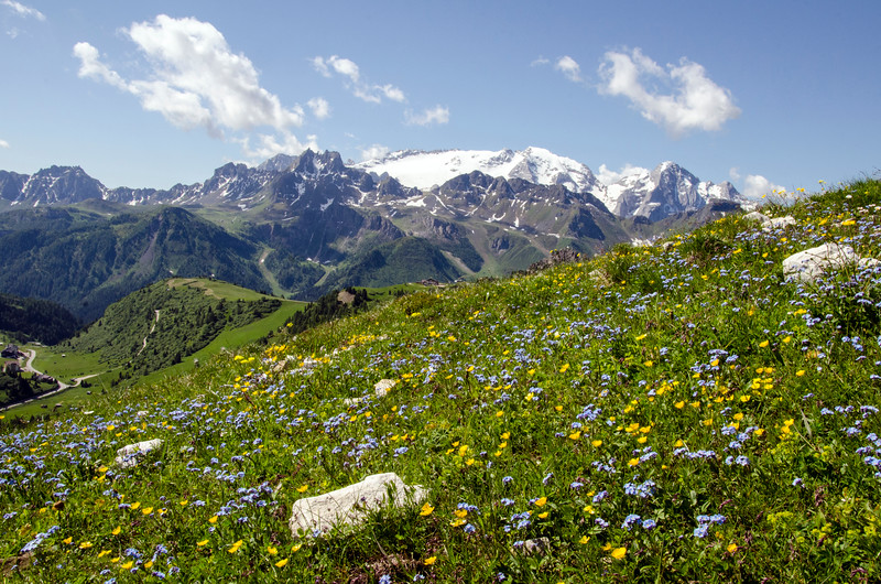 dolomite alpine wildflowers.jpg