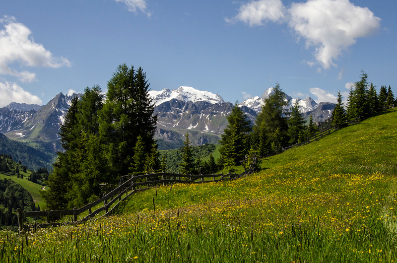 alpine meadow.jpg
